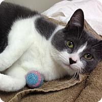 Adopt A Pet :: Lucky - Byron Center, MI