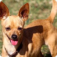 Adopt A Pet :: Bonnie - Kempner, TX