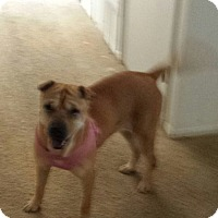 Adopt A Pet :: Lucy - pending - Mira Loma, CA