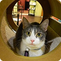 Adopt A Pet :: Clarity - The Colony, TX