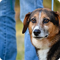Adopt A Pet :: Mooch - Washington, GA
