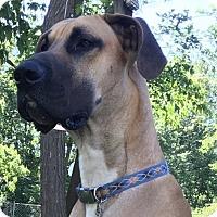 Adopt A Pet :: Hank - Springfield, IL