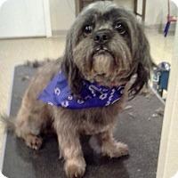 Adopt A Pet :: Oscar - Adoption Pending! - Hillsboro, IL