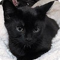 Adopt A Pet :: DonnyW - North Highlands, CA