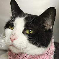 Adopt A Pet :: SUMMER - Clayton, NJ