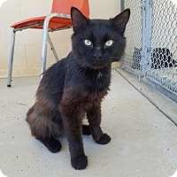 Adopt A Pet :: Uno - Umatilla, FL
