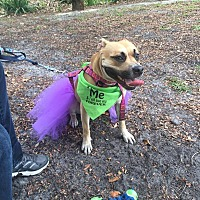 Adopt A Pet :: Roxy - Miami, FL