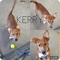 Adopt A Pet :: KERRY - Mesa, AZ