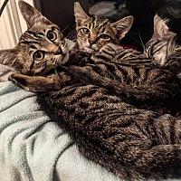 Adopt A Pet :: Rollick - Los Angeles, CA