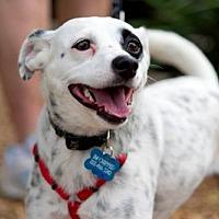 Adopt A Pet :: Rizzo - Denton, TX