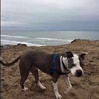 Adopt A Pet :: Mama Blue - San Francisco, CA