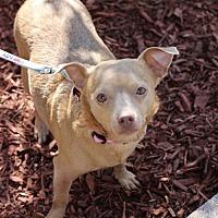 Adopt A Pet :: Sadie - Mount Laurel, NJ