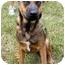 Photo 1 - Vizsla/Labrador Retriever Mix Dog for adoption in Peachtree City, Georgia - Paige