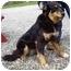 Photo 2 - Collie/Shepherd (Unknown Type) Mix Dog for adoption in Somerset, Pennsylvania - Spring