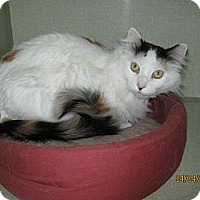 Adopt A Pet :: Patches - Colorado Springs, CO