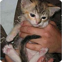 Adopt A Pet :: Evi - Davis, CA