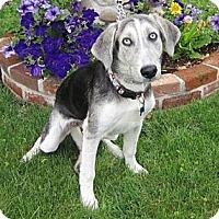 Adopt A Pet :: Annie - Salem, OR