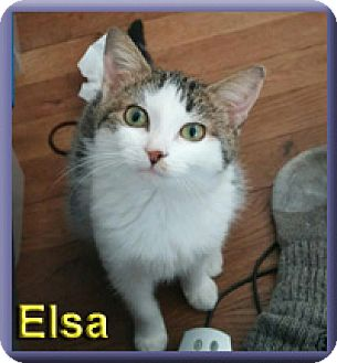 Domestic Shorthair Kitten for adoption in Aldie, Virginia - Elsa