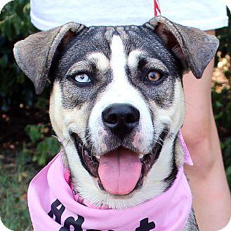 Siberian Husky Mix Puppy for adoption in McCormick, South Carolina - Missy