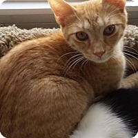 Adopt A Pet :: Oliver - Jackson, NJ