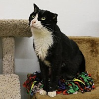 Adopt A Pet :: Dorothy - Morgan Hill, CA
