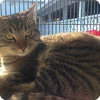 Adopt A Pet :: Arya - Newport Beach, CA