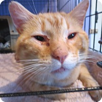 Adopt A Pet :: Bozz - Coos Bay, OR