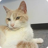 Adopt A Pet :: Peaches - Ridgway, CO