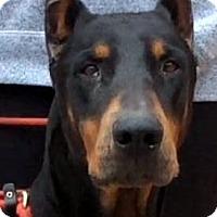 Adopt A Pet :: ZORRO (video) - Los Angeles, CA