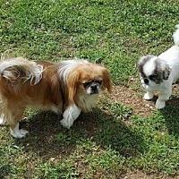 Adopt A Pet :: Garret - Inver Grove, MN
