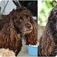 Adopt A Pet :: Boston - San Diego, CA