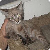 Adopt A Pet :: Noel - Dallas, TX