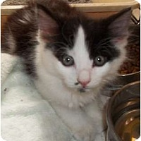 Adopt A Pet :: Lake - Acme, PA