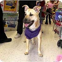 Adopt A Pet :: Betty Boop - Scottsdale, AZ