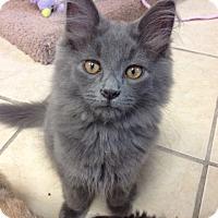 Adopt A Pet :: Lupine - Byron Center, MI