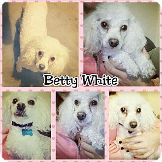 Poodle (Miniature) Dog for adoption in Phoenix, Arizona - Betty White