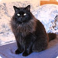 Adopt A Pet :: Suki - Duncan, BC