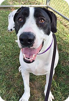 Hound (Unknown Type) Mix Dog for adoption in Mantua, New Jersey - Snow