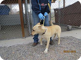 Shepherd (Unknown Type)/Shar Pei Mix Dog for adoption in Monte Vista, Colorado - Luna