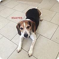 Adopt A Pet :: HUNTER- Courtesy Posting - Ventnor City, NJ