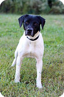 Hound (Unknown Type) Mix Dog for adoption in Waldorf, Maryland - Walker