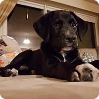 Adopt A Pet :: Zar - Saskatoon, SK