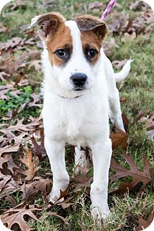 Terrier (Unknown Type, Small)/Hound (Unknown Type) Mix Puppy for adoption in Jersey City, New Jersey - Adam Driver