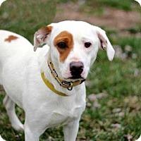 Adopt A Pet :: FRANNIE - Andover, CT
