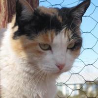Adopt A Pet :: Cali - Las Cruces, NM