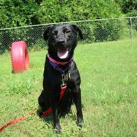 Adopt A Pet :: Curly Q - Auburn, AL