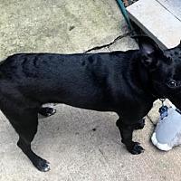 Adopt A Pet :: Panasonic - Alpharetta, GA