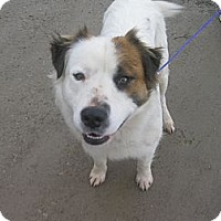 Adopt A Pet :: #017-14  @ Animal Shelter - Zanesville, OH