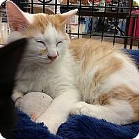 Adopt A Pet :: Fozzy - Vero Beach, FL