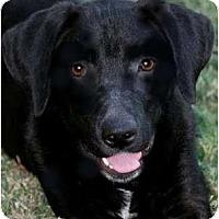 Adopt A Pet :: DRAKE - Hendersonville, TN